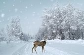 picture of bambi  - A fawn stands on the snowy road - JPG