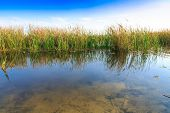 picture of bulrushes  - beautiful large lake with reeds in autumn season  - JPG