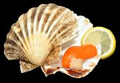 stock photo of scallop-shell  - Raw king scallop clam and shell with lemon on a black background - JPG