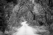 image of dirt road  - Dirt road winding through a dense forest in winter in shallow focus in black and white - JPG