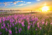 stock photo of horizon  - beautiful rural landscape with the sunrise and blossoming meadow - JPG
