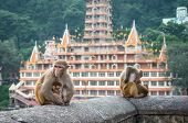 stock photo of macaque  - Indian Macaque monkeys at Laxman Jhula bridge Rishikesh India - JPG