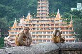 stock photo of macaque  - Indian Macaque monkeys at Laxman Jhula bridge Rishikesh India - JPG