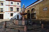stock photo of colt  - the Plaza del Potro  - JPG