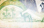pic of dromedaries  - Dromedary in old Tunisian banknote - JPG