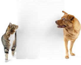 pic of cat dog  - Cat and dog side to side of banner - JPG