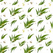 picture of eucalyptus leaves  - Seamless pattern with eucalyptus pods - JPG