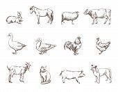 stock photo of animal silhouette  - Vector sketch of twelve farm animals silhouette - JPG