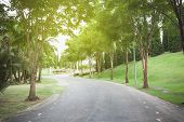 picture of tree lined street  - Empty curved road with natural trees  - JPG