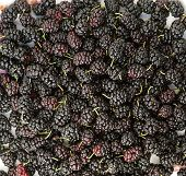 picture of mulberry  - Heap fresh organic mulberry closeup background berries - JPG