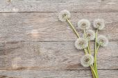 stock photo of dandelion  - Dandelion flowers on wooden background with copy space - JPG