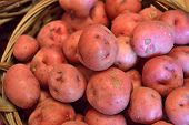pic of solanum tuberosum  - Basket full of fresh new potatoes locally grown in Florida - JPG