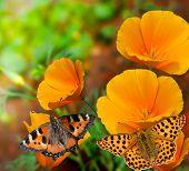 Постер, плакат: бабочки на цветы