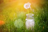 Dandelion seed wishes, saved in a bottle. Focus on floating seed and stem poster