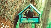 Pigeon In The Birdhouse. A Bird In The House. The Bird Is Resting. House For Birds poster
