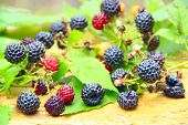 Crop Of Black Raspberry With Ripe Berries. Fresh And Sweet Black Raspberry On Wooden Board. Close-up poster