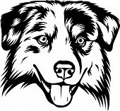 Animal Dog Australian Shepherd 6T6.eps poster