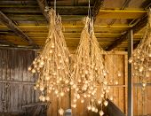 stock photo of rafters  - Bunches of drying Nigella plant herbs hanging from rafters of wooden barn - JPG
