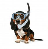 picture of basset hound  - a basset hound sitting down on a white background with a mask on - JPG