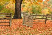 image of split rail fence  - Split railed fence and open gate leading into a field with a maple tree and beautiful fall colors - JPG