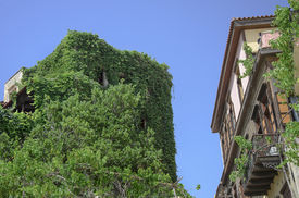 pic of outdated  - Outdated building completely overgrown with greenery in old town