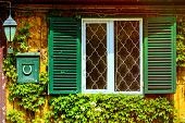 pic of english ivy  - Window With Opened Shutters And Letterbox Near It - JPG