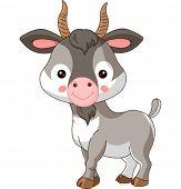 stock photo of goat horns  - Farm animals - JPG
