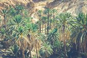 pic of tozeur  - Mountain oasis Chebika at border of Sahara Tunisia Africa
