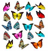 image of color animal  - Big collection of colorful butterflies - JPG