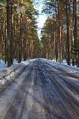 picture of snowy-road  - Snowy road in winter landscape - JPG