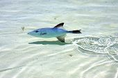 pic of gulf mexico  - little fish isla contoy in mexico froath and foam the sea drop sunny day wave - JPG