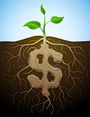 picture of bine  - Roots and tuber in shape of dollar symbol - JPG