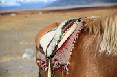 stock photo of gaucho  - Closeup of horse saddle in Patagonian steppe - JPG
