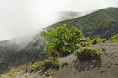 stock photo of vegetation  - Green vegetation on the side of the Irazu volcano crater in the Cordillera Central - JPG
