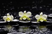 image of three life  - Still life with three white orchid with therapy stones  - JPG