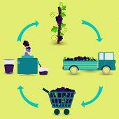 stock photo of production  - Grape juice production steps - JPG