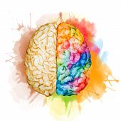 stock photo of right brain  - Beautiful vector image with nice watercolor brain - JPG