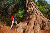 stock photo of redwood forest  - Man with backpack stands near big tree in Redwood California during summer sunny day - JPG