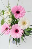 picture of gerbera daisy  - pink and white gerbera daisies with white flowers and green leaves - JPG