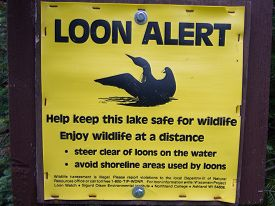 stock photo of loon  - LOON ALERT sign warns boaters and fisherman to stay away from Common Loons to keep them safe - JPG
