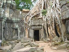 stock photo of mahabharata  - A tree over old ruin temple  - JPG