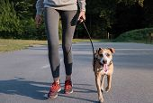 Woman In Running Suit Training With Her Dog. Young Fit Female And Staffordshire Terrier Dog Doing Mo poster