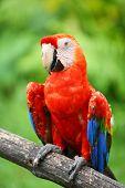 foto of endangered species  - Parrot - JPG