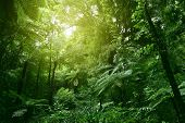 Sunlit tree canopy in tropical jungle  poster