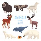 Arctic Animals Set, Polar Fox, Bison, Raccoon Dog, Wolf, Mountain Goat, Killer Whale, Lemming, Bear  poster