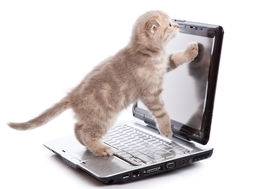 pic of funny animals  - Small funny Kitten on laptop - JPG