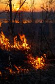 image of novosibirsk  - Fire in siberian forest near Novosibirsk Russia  - JPG