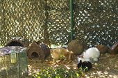 pic of thumper  - Rabbits in a cage at a bowl with food in a zoo - JPG