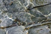 picture of shale  - Ripple patterns reflect light on water flowing over cracked shale creek bed. Moss textures on gray rock under the water. Horizontal format with copy space. ** Note: Slight blurriness, best at smaller sizes - JPG