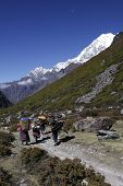 picture of sherpa  - Locals carry wood and supplies in the mountains of Nepal - JPG